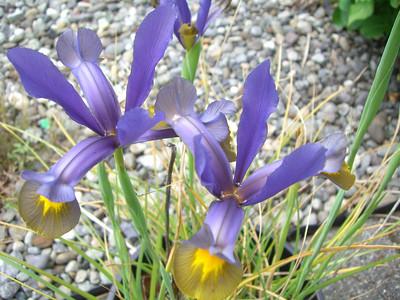 Flower - June '08