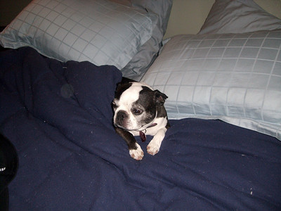 """""""this is my bed too damnit"""""""