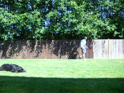 Staining the backyard fence, while Malcolm watches.