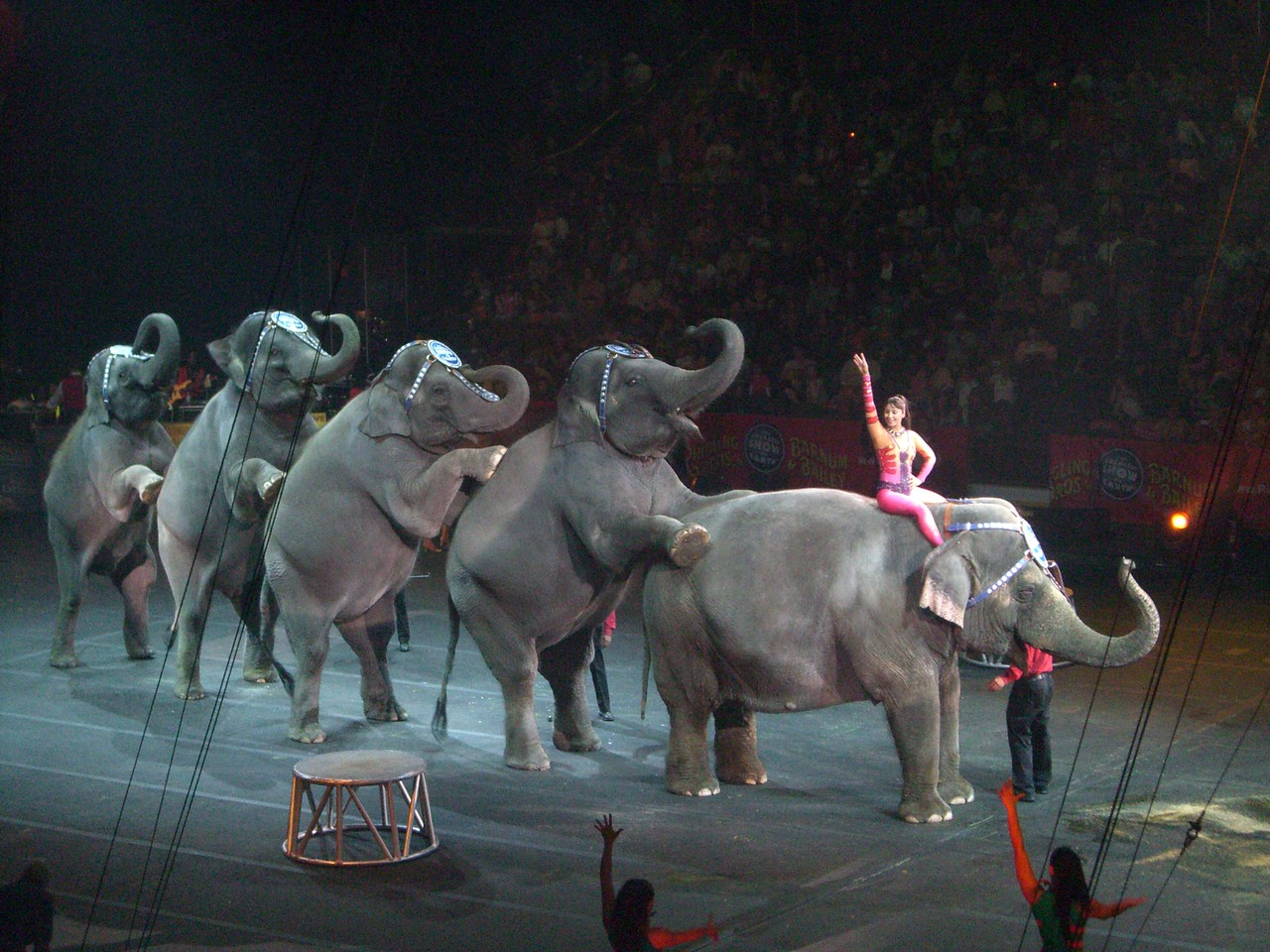 Man, those elephants can poop! Circus - 9.7.2008
