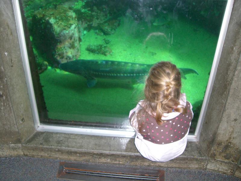 Seattle Aquarium '08 - Watching the large fish swim around us.
