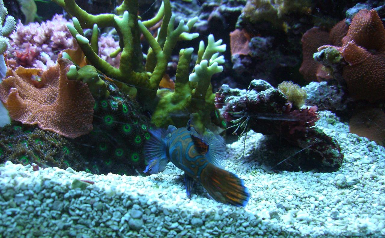 Seattle Aquarium '08 - nice close up