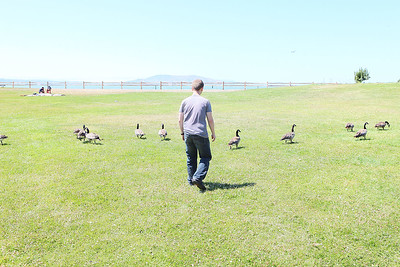Vitaly chasing geese