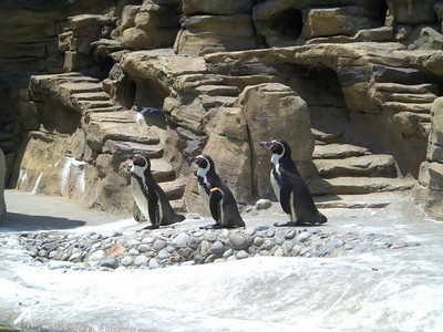Penguins.  Zoo trip with Grandmama Carol, Papa Ben, Whitney, Kimber and I (June '09).