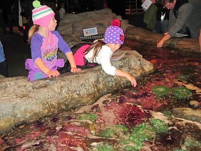 Oct. '11 - Aquarium