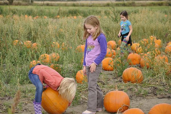 Oct. '11 - Pumpkin Farm - Trying to pick up her pumpkin