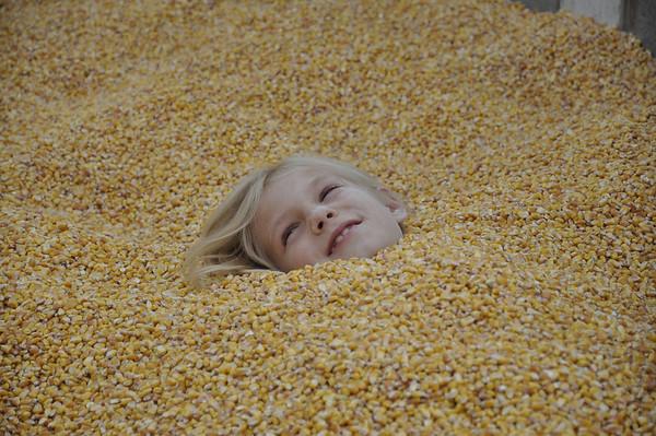 Oct. '11 - Pumpkin Farm. Buried in corn!