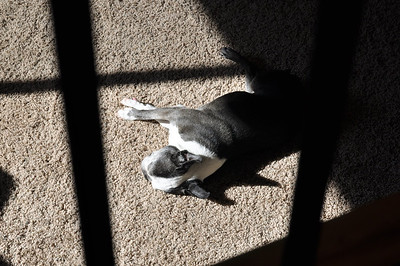 Chloe catching some sun.