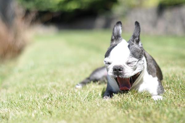 Chloe, yawning again.