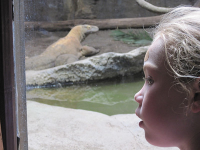 Woodland Park Zoo - watching the komodo dragon