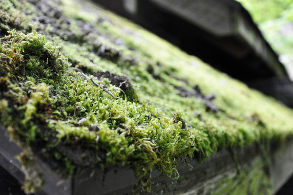 2012.04 - Zoo. Moss on a roof.