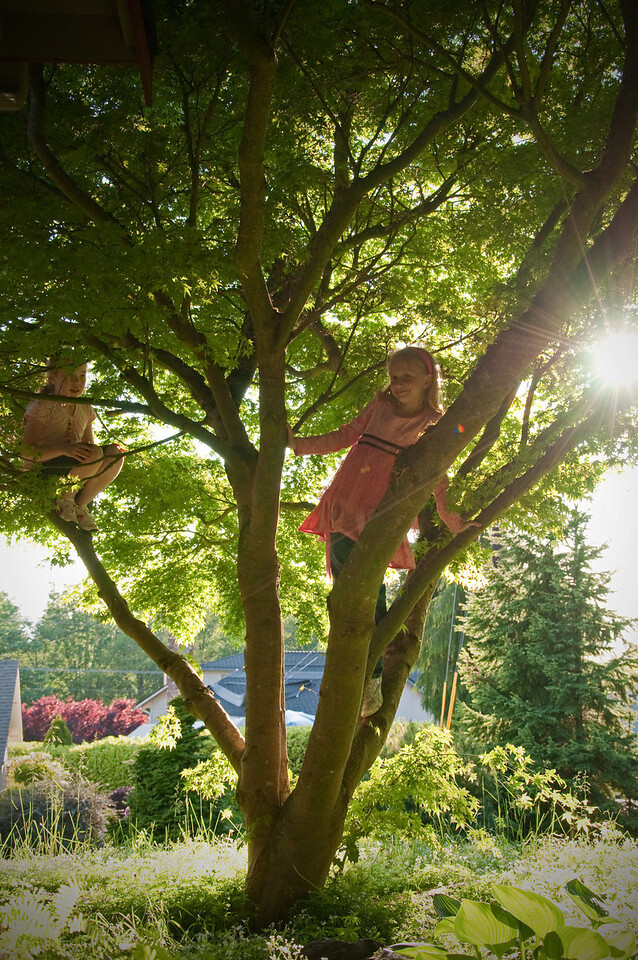 2012.05 - Climbing trees