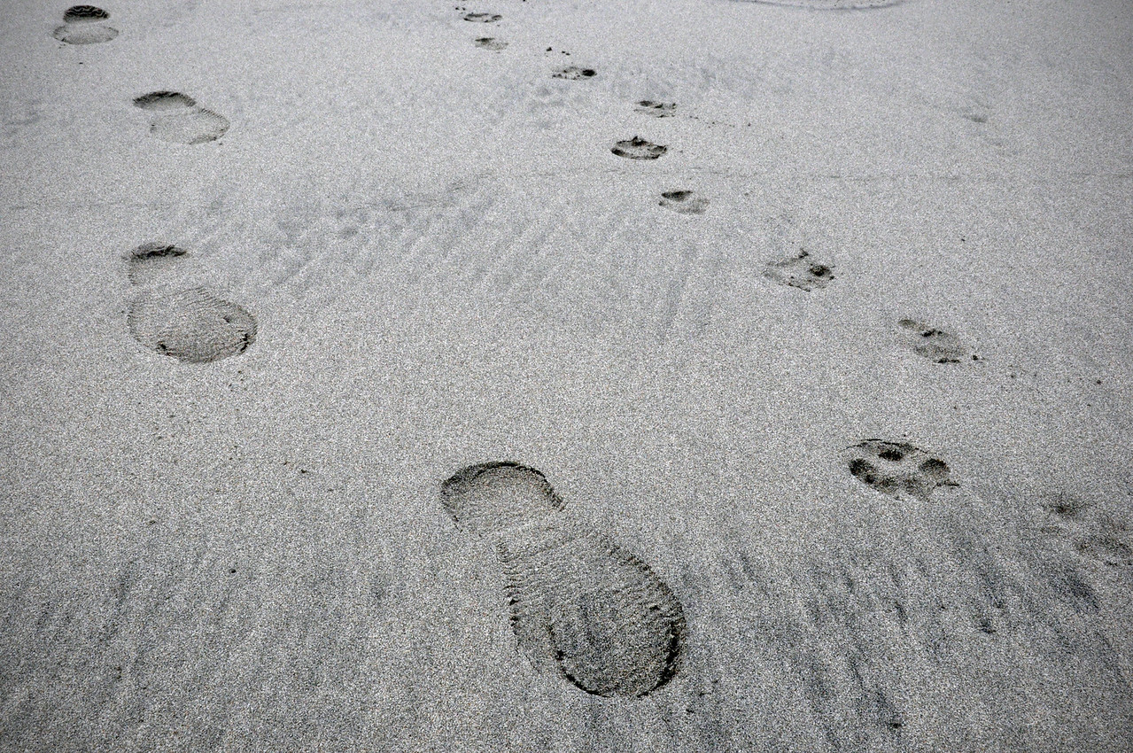 2012.05 - Long Beach, WA. Paw/foot prints.