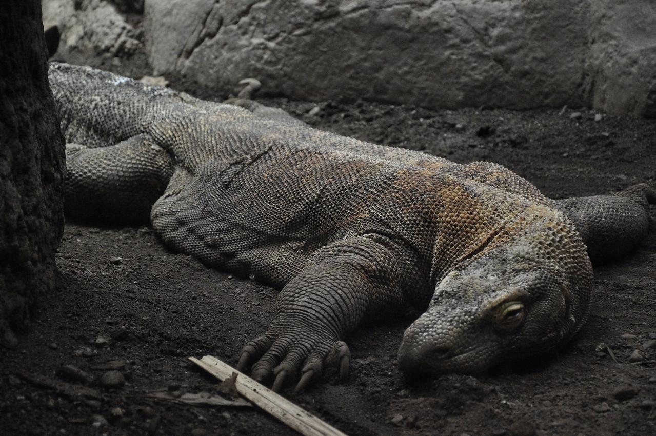 2012.04 - Zoo. Komodo Dragon.