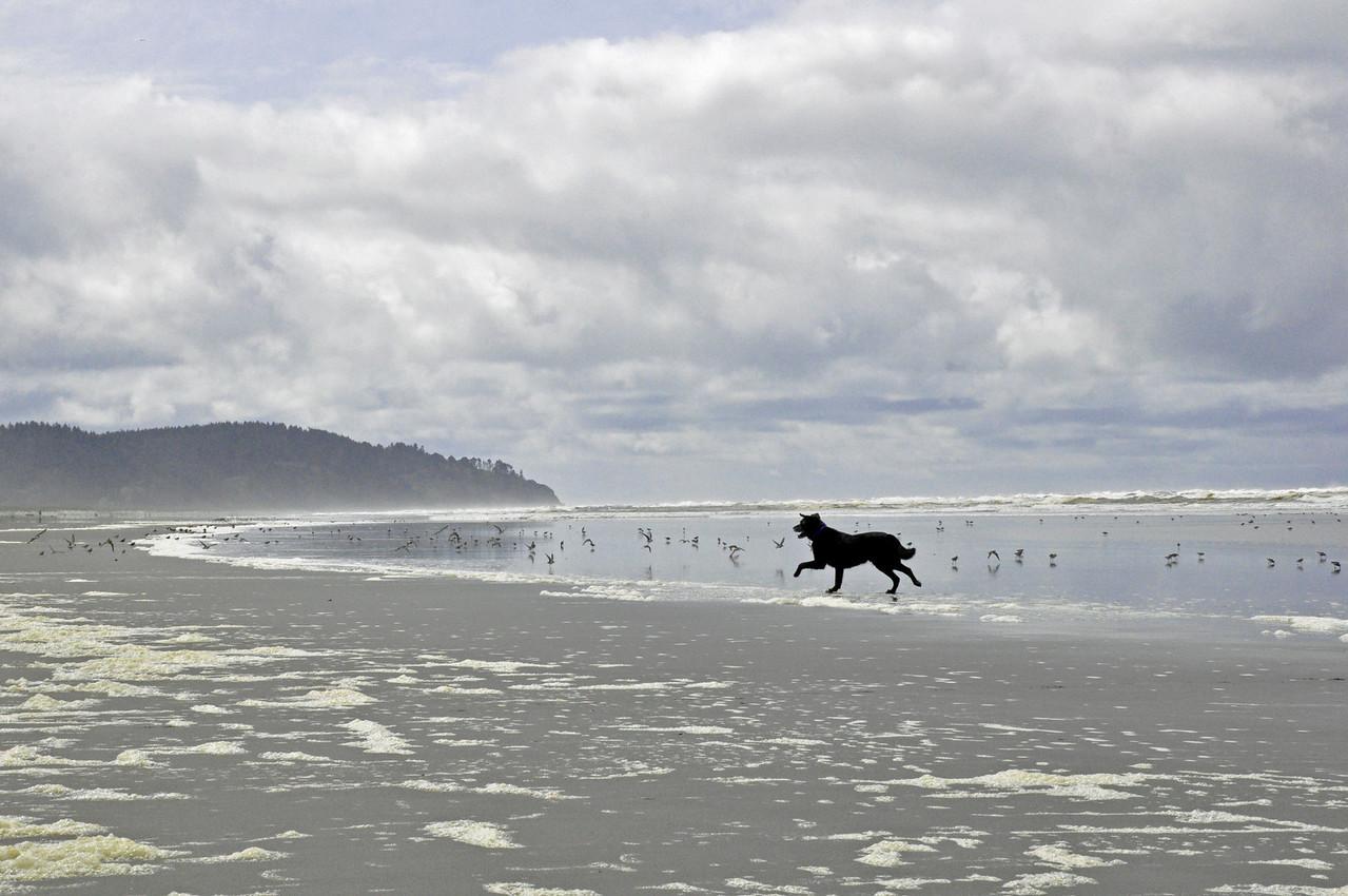 2012.05 - Long Beach, WA. Malcolm chasing birds!