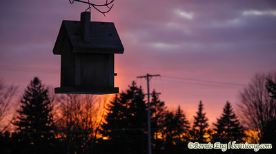 The sun sets through ice crystals behind our subsidized bird housing. March 3, 2013.