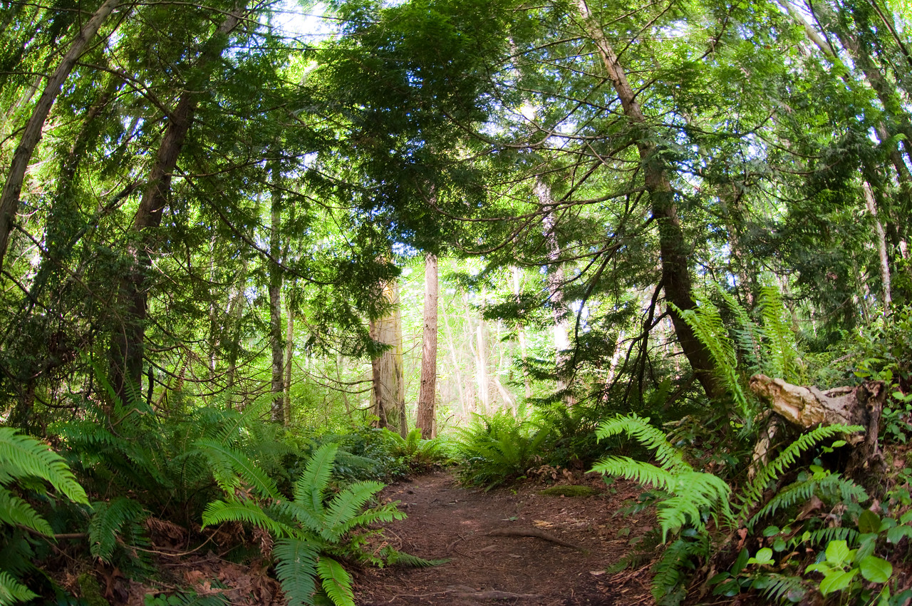 2013.06.02 - hike at Japanese Gulch with a fisheye lens