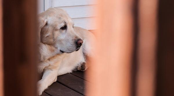 2013.09.27 - Illinois trip to see Grandma. Back porch dogs.