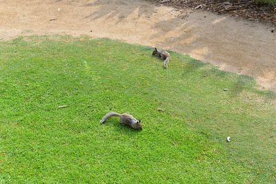 More squirrels