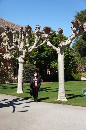 20140410 Filoli Gardens23