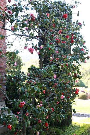 20140410 Filoli Gardens69