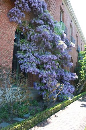 20140410 Filoli Gardens71
