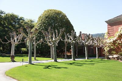 20140410 Filoli Gardens26