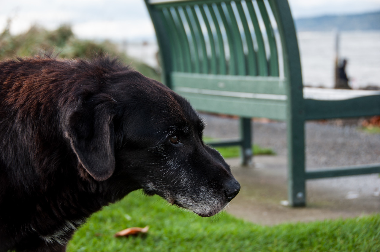 2014.11.06 - Malcolm at the Mukilteo Ferry landing & park