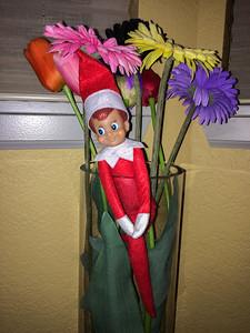 2014.12.13 - Ellken, the elf on a shelf