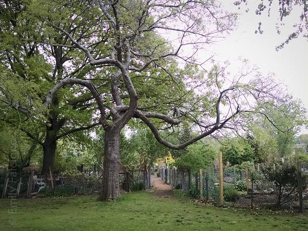 Dancing Tree 05-11-15