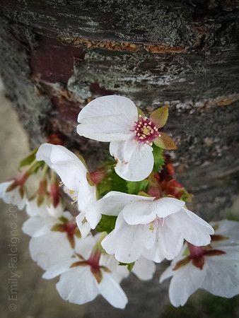 Springtime 04-30-15