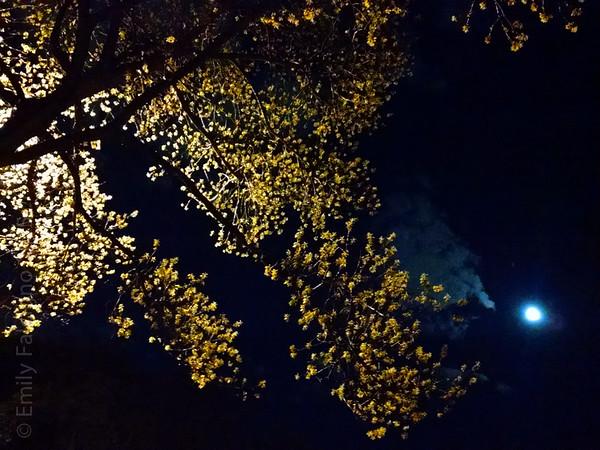Night Lights 05-03-15