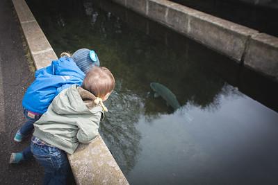 WI Fish Hatchery