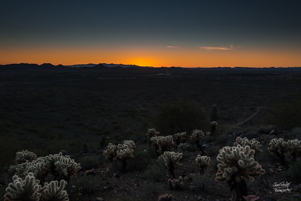 Sonoran Cholla Sunset  II