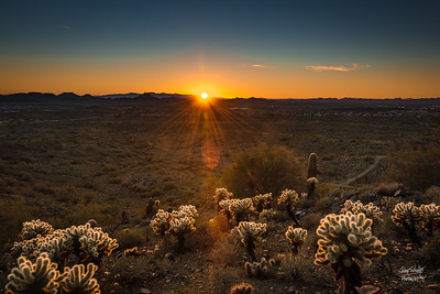 Sonoran Cholla Sunset I
