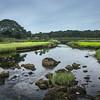Great Sippewisett Marsh (1)