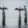 Bird Posts