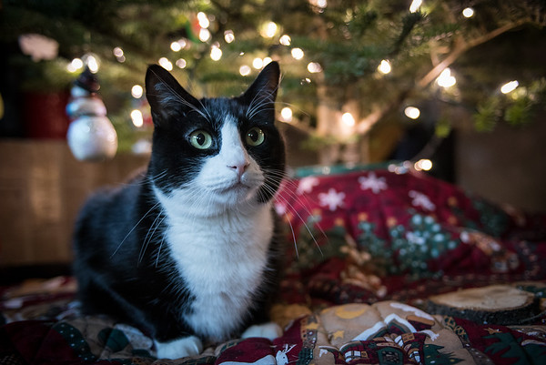 12.09.2017 - Dexter around the Christmas tree