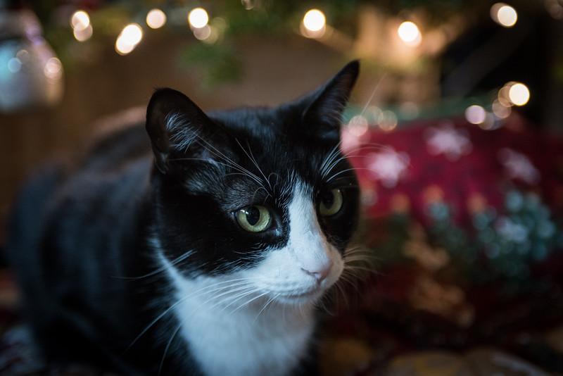 12.09.2017 - Dexter around the Christmas tree