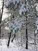 2017_Snow_Dec10-002