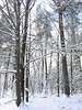 2017_Snow_Dec10-005