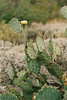 2017_SaguaroNatPark_May8-018