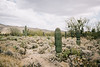 2017_SaguaroNatPark_May8-010