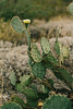 2017_SaguaroNatPark_May8-017