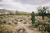 2017_SaguaroNatPark_May8-011