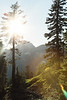 CindyGiovagnoli_Redwoods_CraterLake_MountRainier_PNW_National_Park_trees_camp_road_trip-006