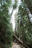 CindyGiovagnoli_Redwoods_CraterLake_MountRainier_PNW_National_Park_trees_camp_road_trip-013
