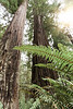 CindyGiovagnoli_Redwoods_CraterLake_MountRainier_PNW_National_Park_trees_camp_road_trip-022
