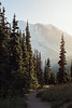 CindyGiovagnoli_Redwoods_CraterLake_MountRainier_PNW_National_Park_trees_camp_road_trip-007
