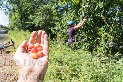 2018 Cherry Picking